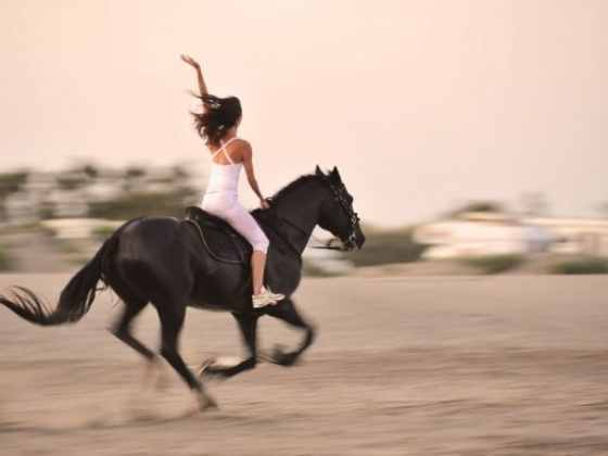 Horse Riding and Lessons